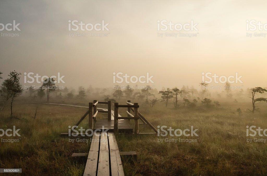 Paesaggio con pista di legno nella palude foto stock royalty-free