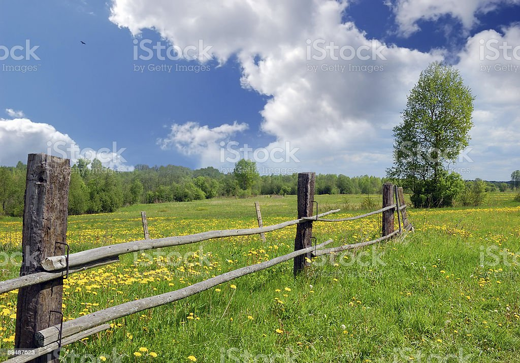 Landscape with yellow dandelions royalty-free stock photo