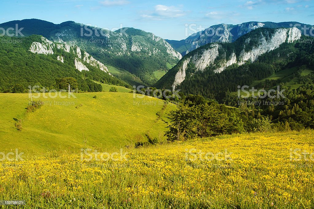 Landscape with yellow flowers and blue sky royalty-free stock photo