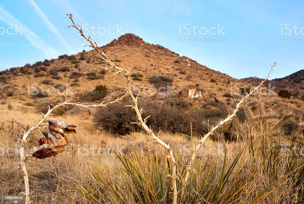 landscape yucca desert mountain royalty-free stock photo