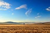 SUMMER LANDSCAPE.Between Puglia and Basilicata: corn field at dawn. (ITALY)