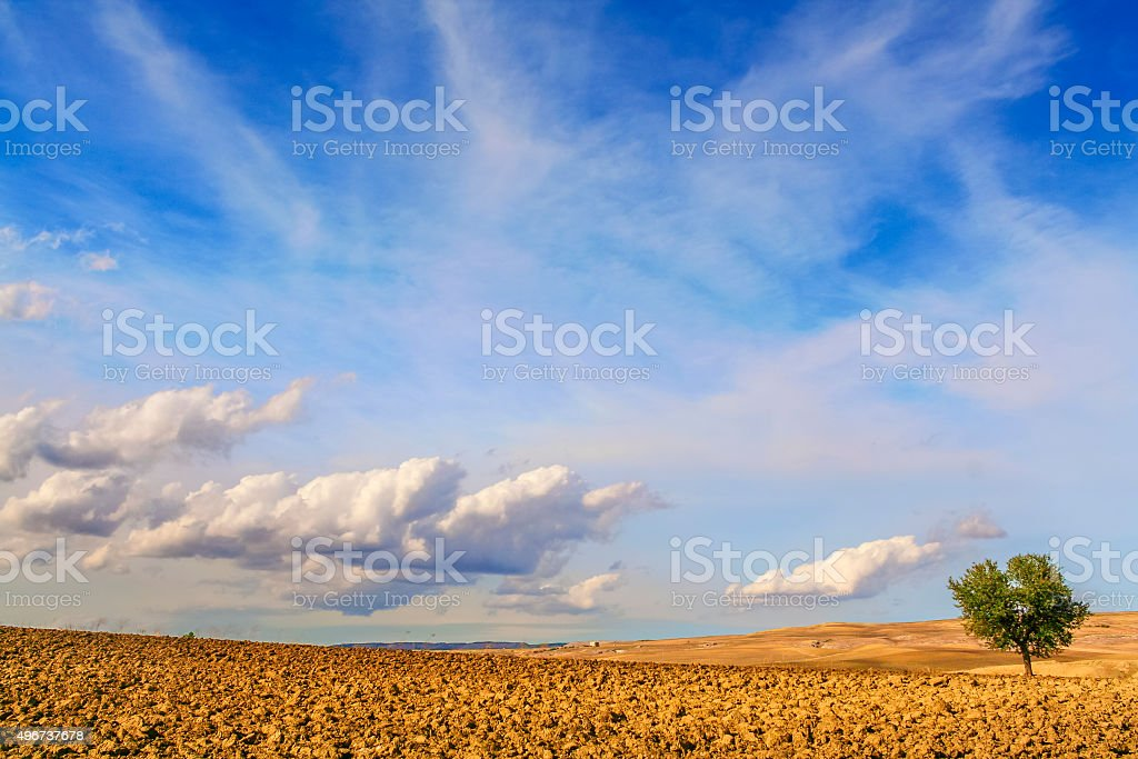 SUMMER LANDSCAPE.Between Puglia and Basilicata:lonely tree on plowed soil.ITALIA stock photo