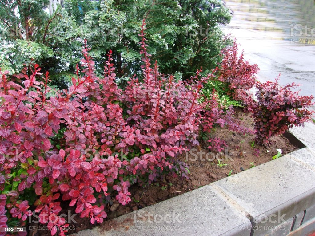 Landscaped Front Yard stock photo