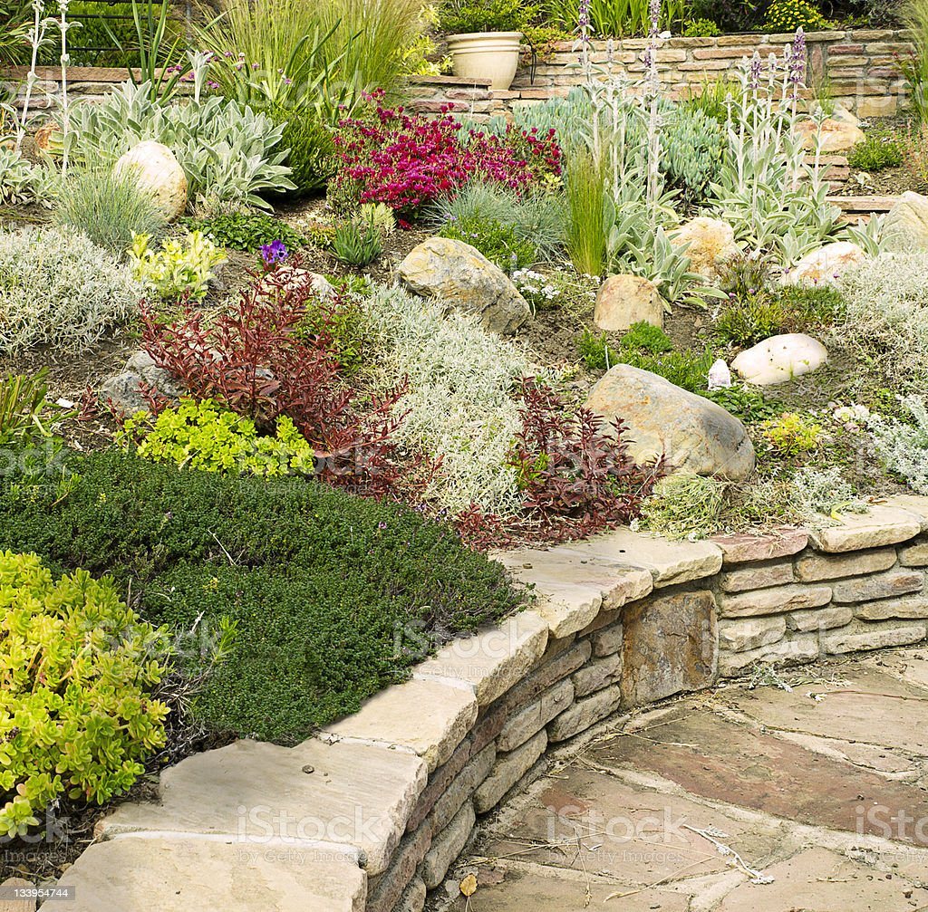 Landscaped garden with a variety of plants and rocks stock photo