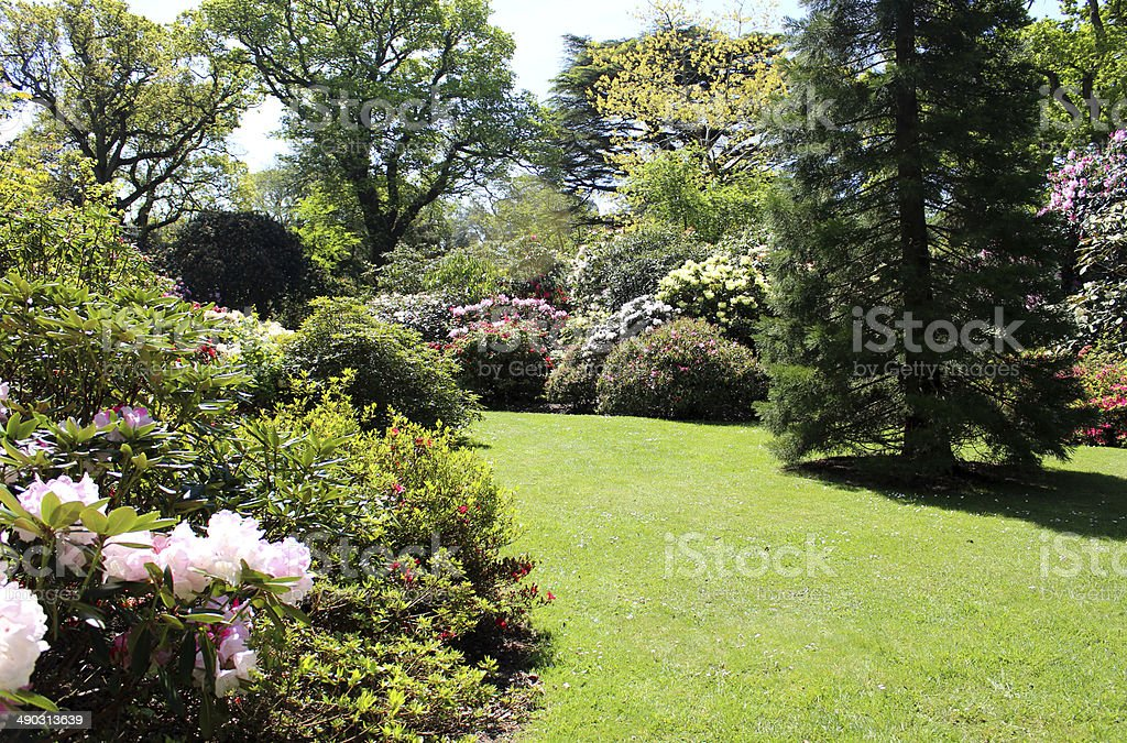 Landscaped garden with flower bed, lawn, shrubs and sequoia tree stock photo