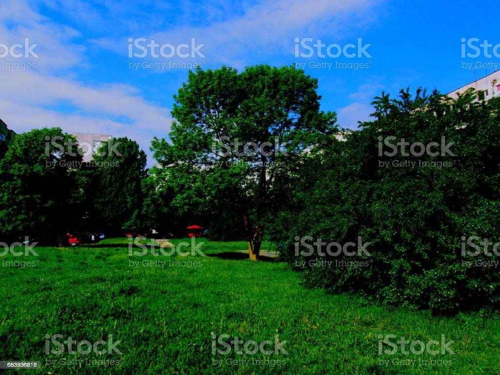 Landscaped neighborhood stock photo