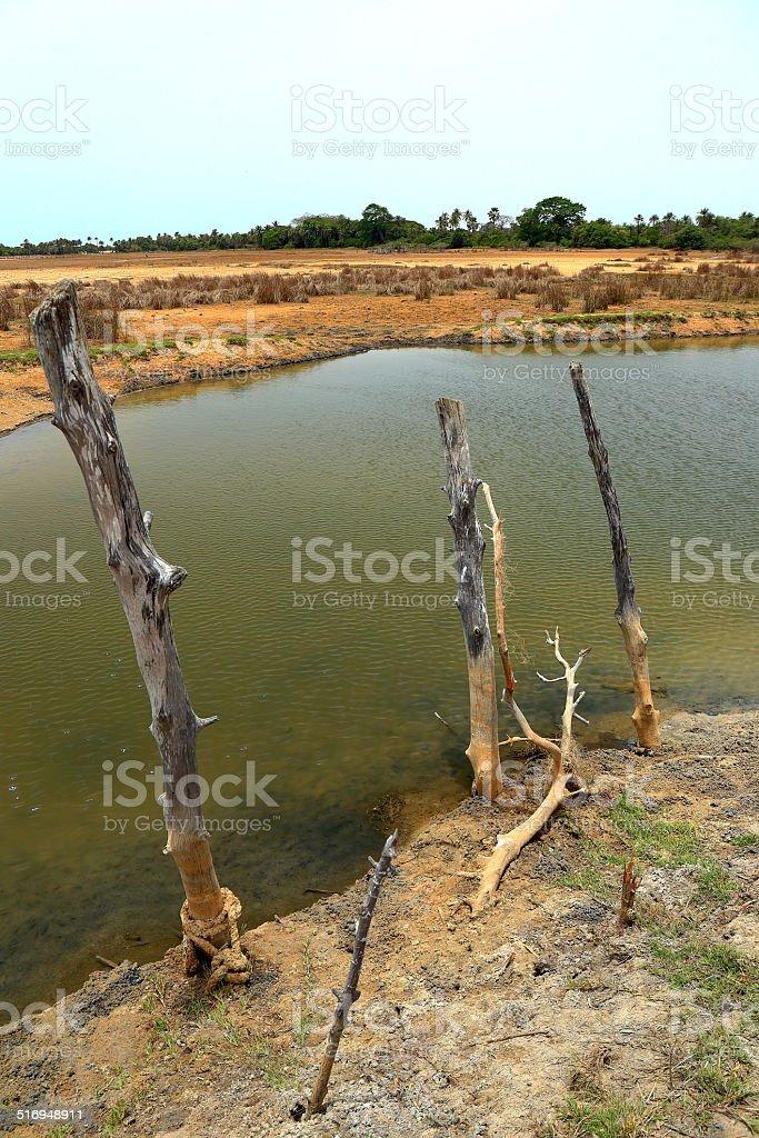 Landscape-Diogue-Senegal stock photo