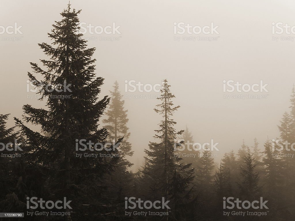 Landscape-Soft And Serene royalty-free stock photo