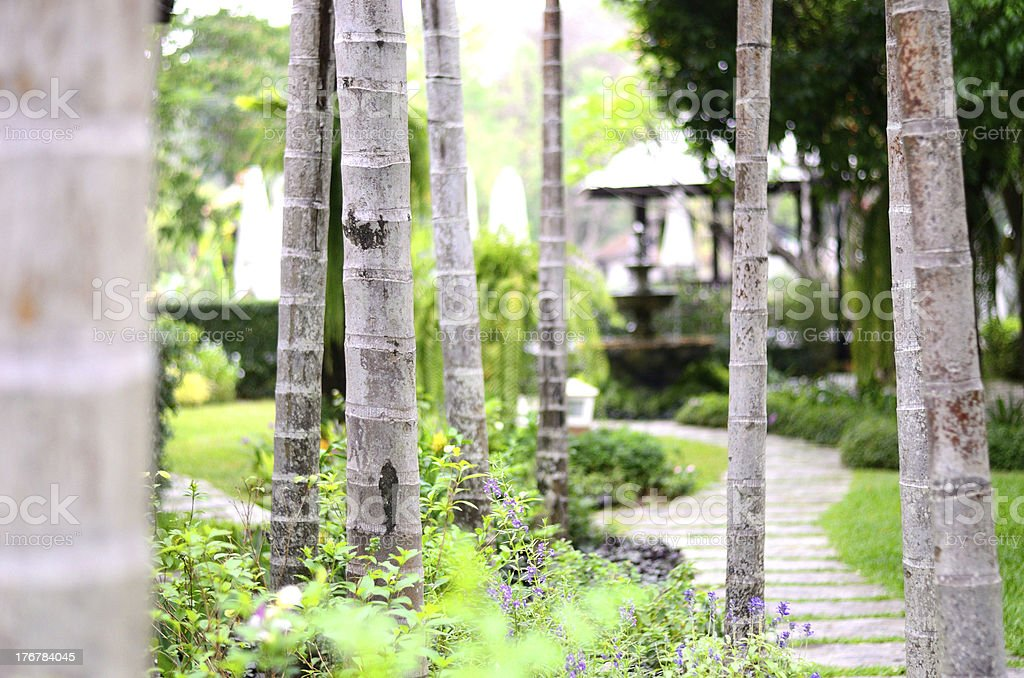 Landscaping in the garden. royalty-free stock photo