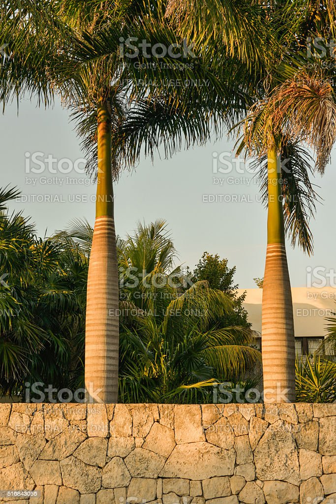 Landscaping Outside a Home in Akumal, Mexico. stock photo