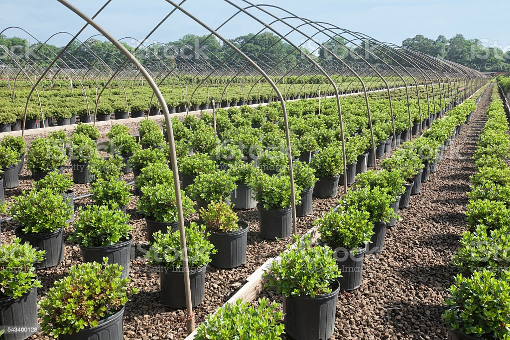 Landscaping Plants in Grower Nursery stock photo