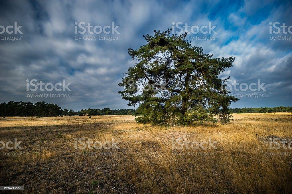 Landschaft des Nationalparks De Hoge Veluwe stock photo