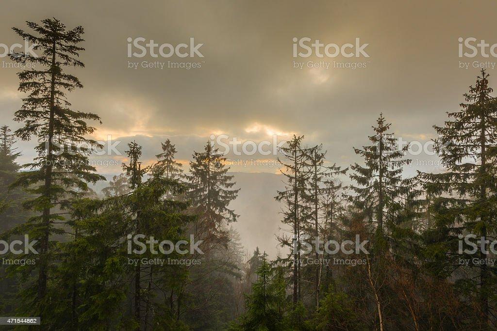 Landschaft im Nebel photo libre de droits