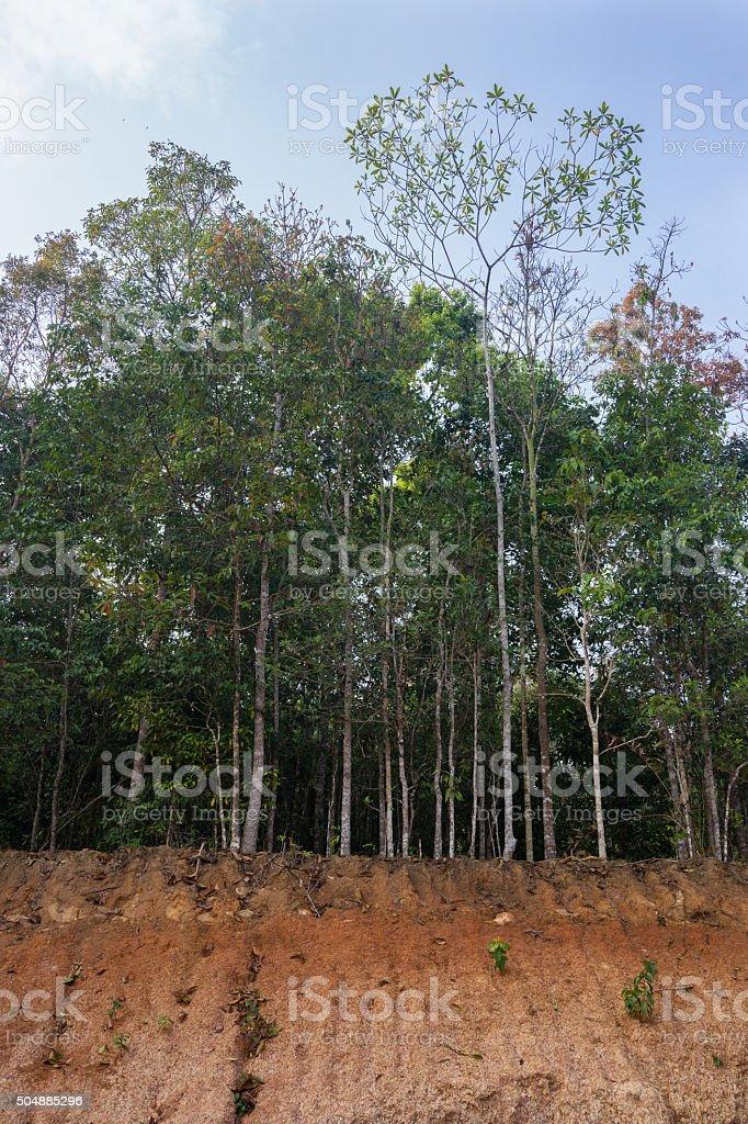Glissement de terrain dans la forêt. photo libre de droits