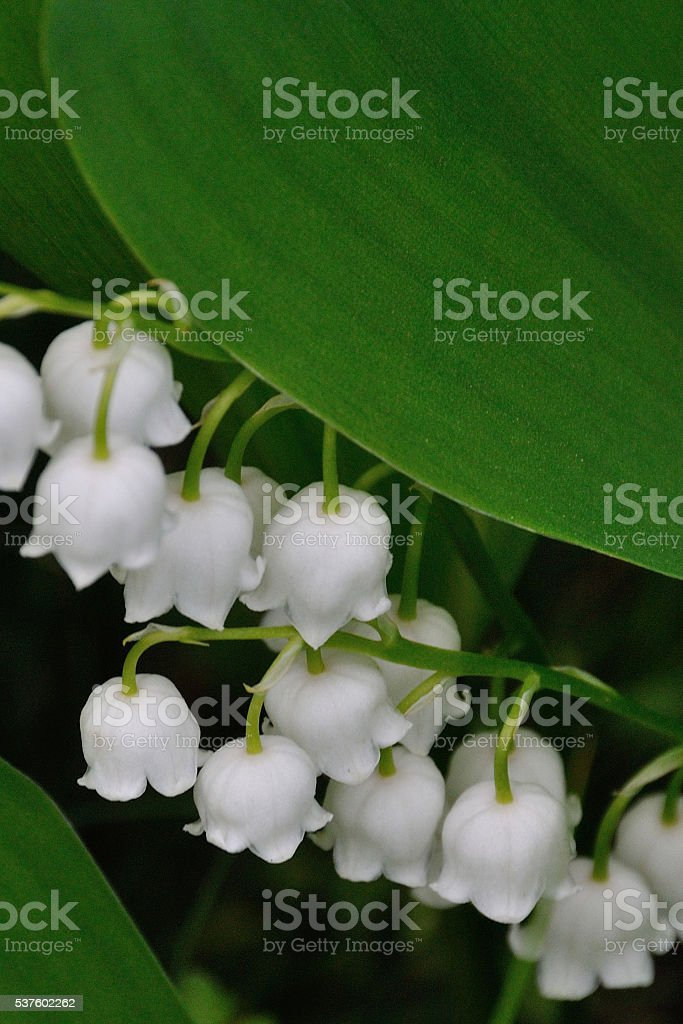 Landuse in the garden stock photo