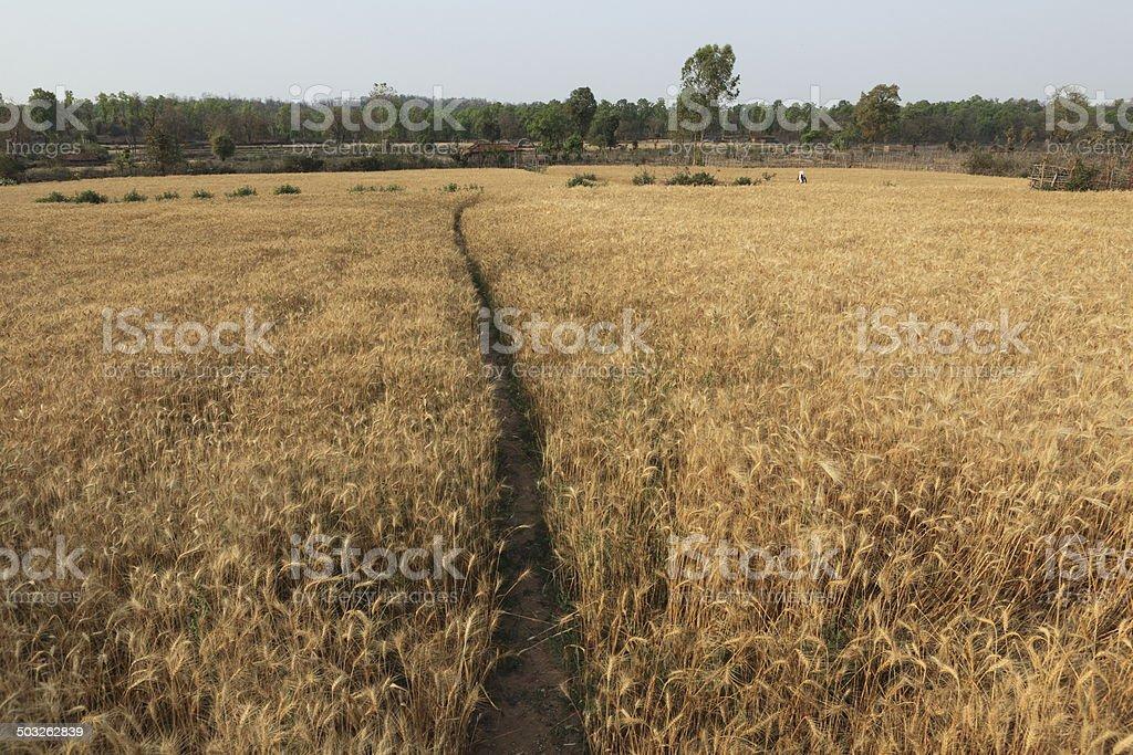 Landwirtschaft in Indien stock photo
