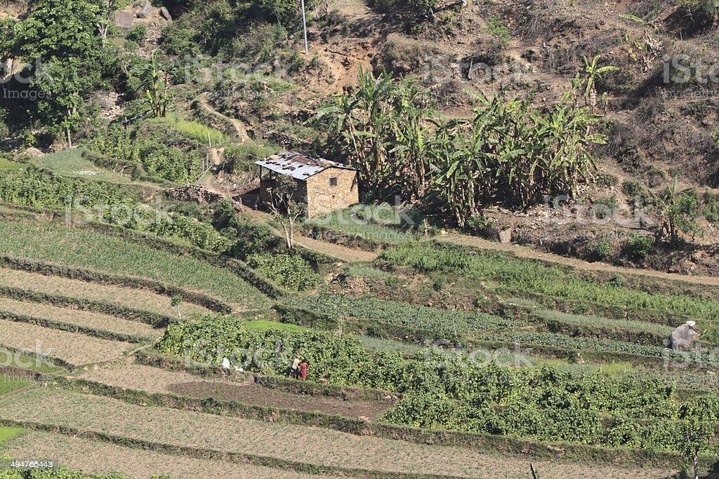Landwirtschaft in Nepal stock photo