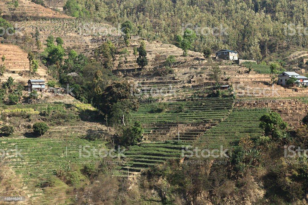 Landwirtschaft und Reisterrassen in Nepal stock photo