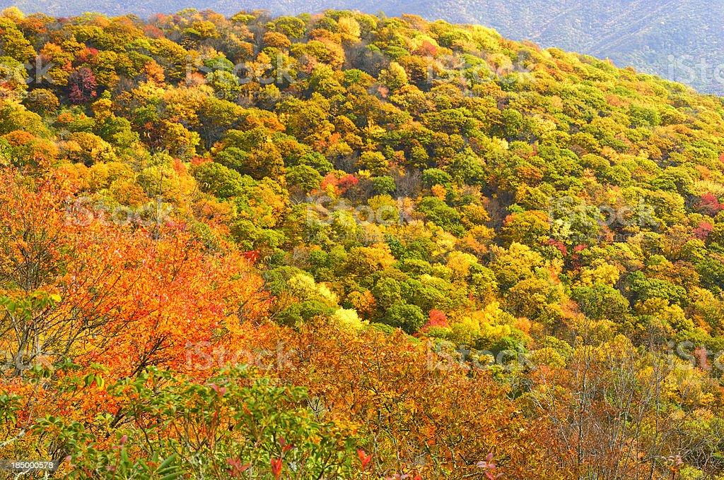 Lane Pinnacle Area on the Blue Ridge Parkway royalty-free stock photo
