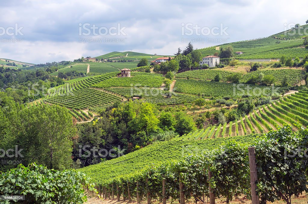 Langhe, Barolo vineyards summer panorama. Color image stock photo