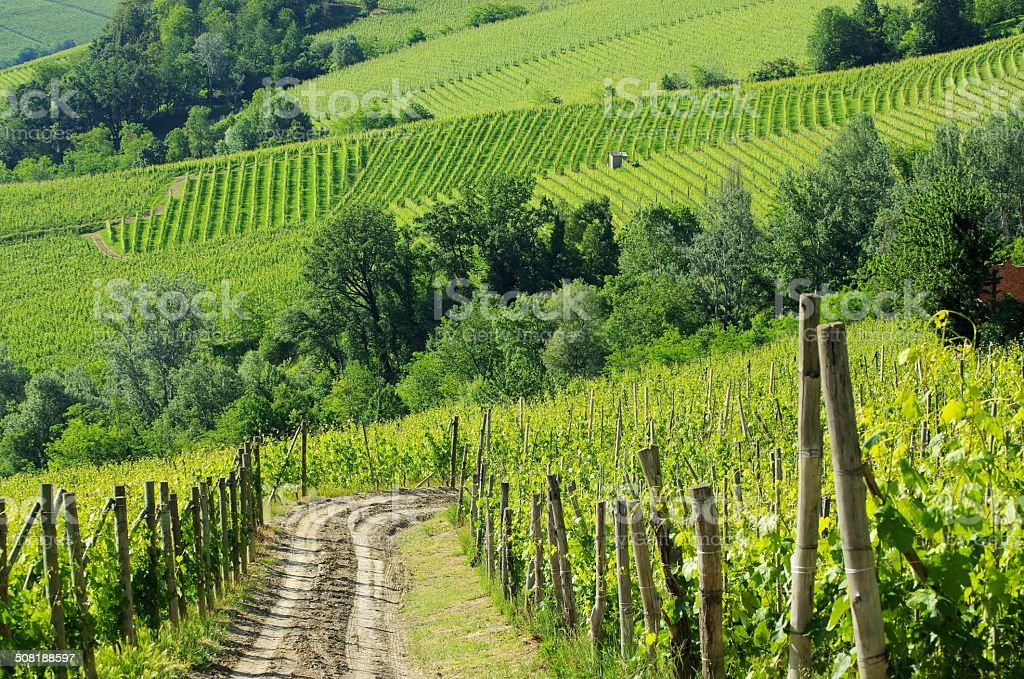 langhe vineyards stock photo