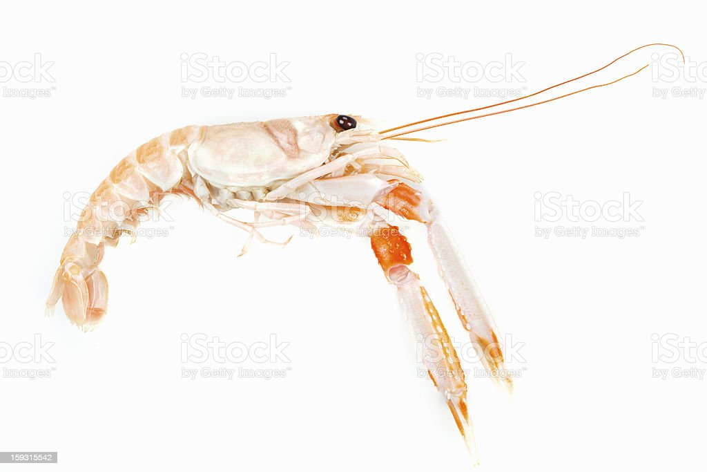 Langoustine or Prawn prepared seafood. Raw food. royalty-free stock photo