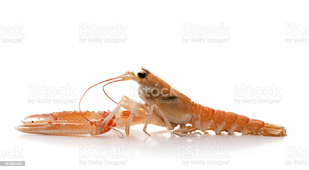 Langoustine or Scampi stock photo