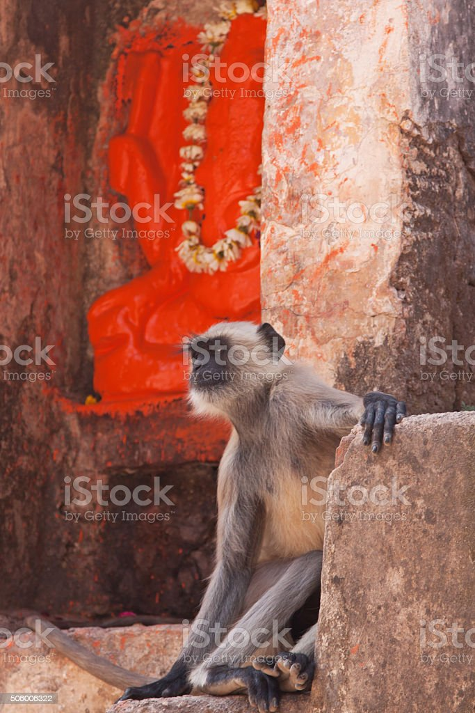 Langur monkey at a shrine outside a Hindu temple, India stock photo