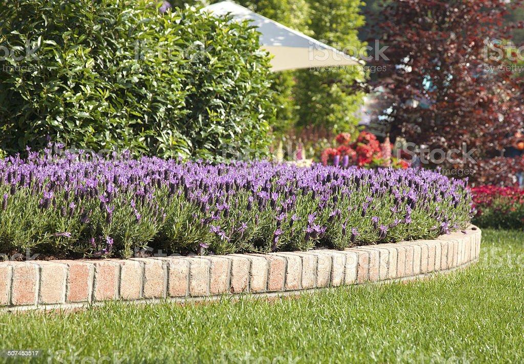 Lanscaped Garden stock photo