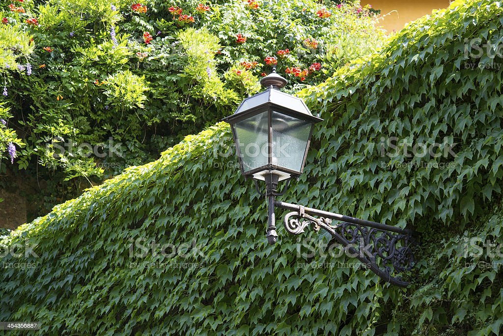 Lantern on the wall, overgrown with ivy. royalty-free stock photo