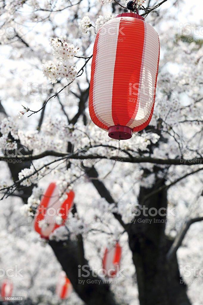 Laternen gegen japanische sakura Lizenzfreies stock-foto