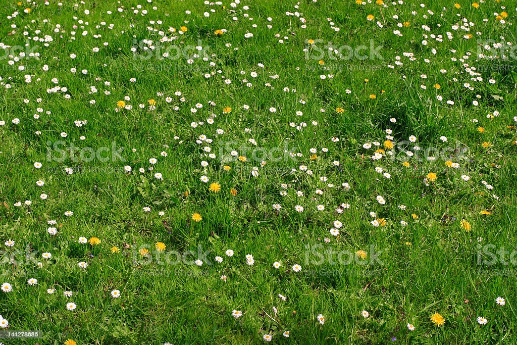 Lanw with flowers royalty-free stock photo