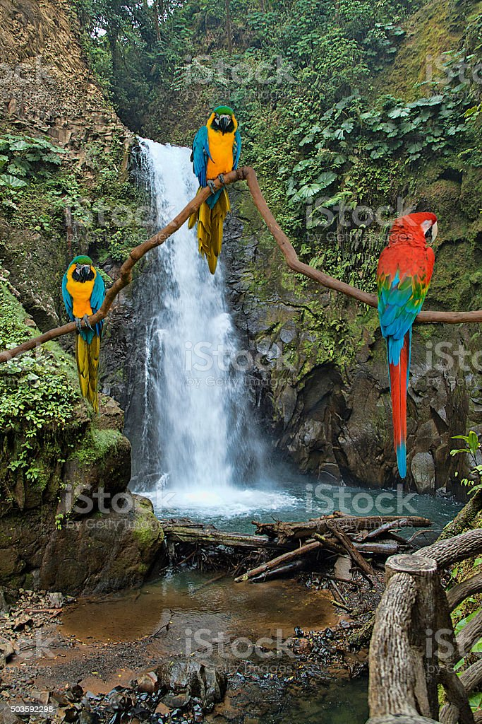 Lapaz Waterfall and Macaws stock photo