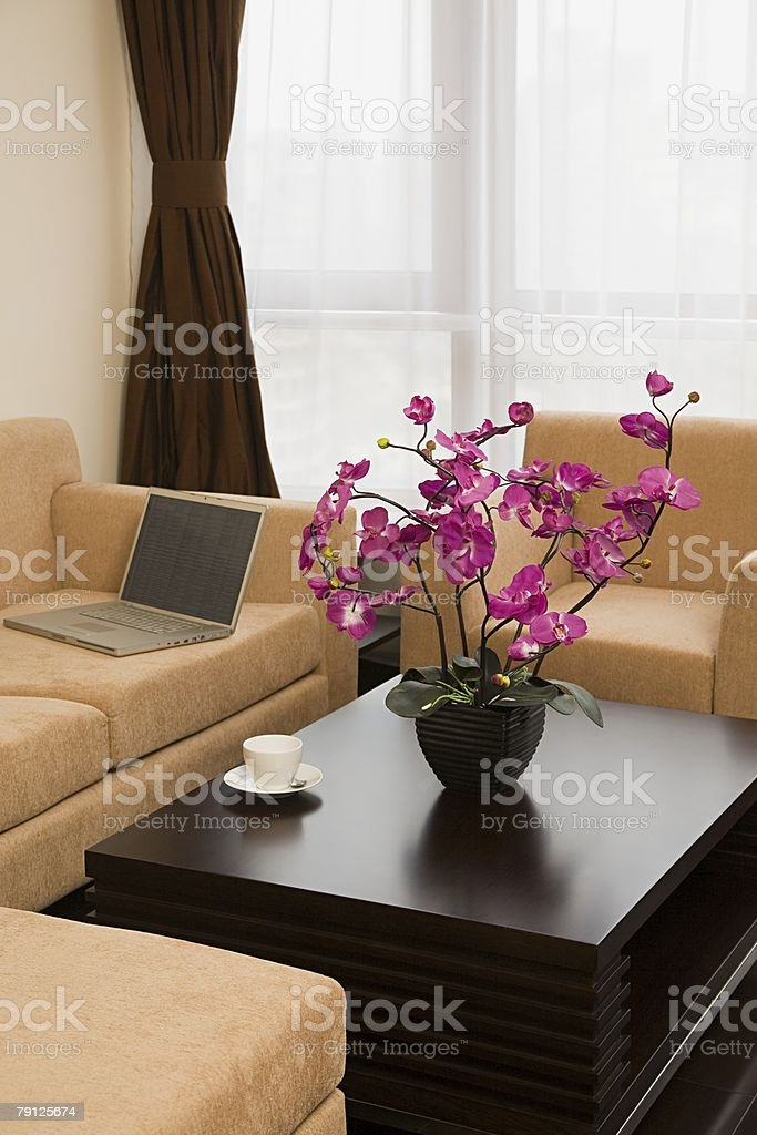 Laptop and plant in a living room royalty-free stock photo