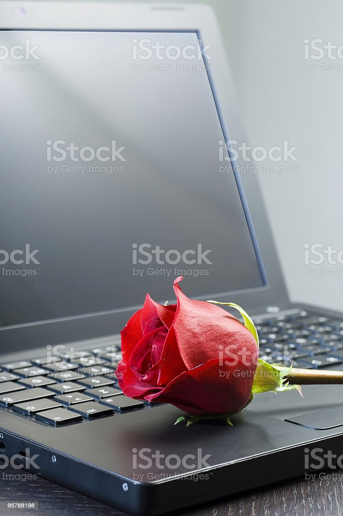 Laptop and rose royalty-free stock photo