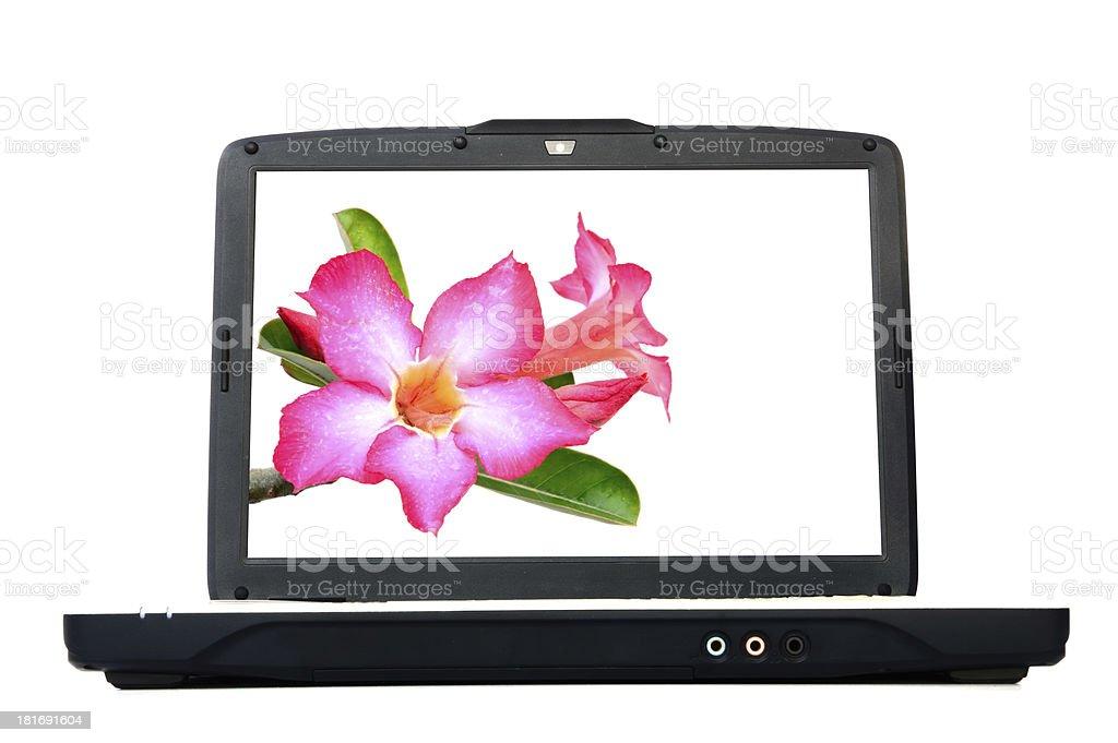 laptop monitor with desert rose flower royalty-free stock photo