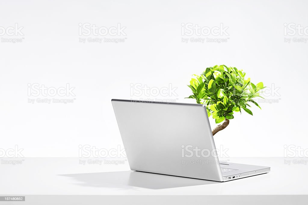 A laptop with a small tree growing out of the keyboard stock photo