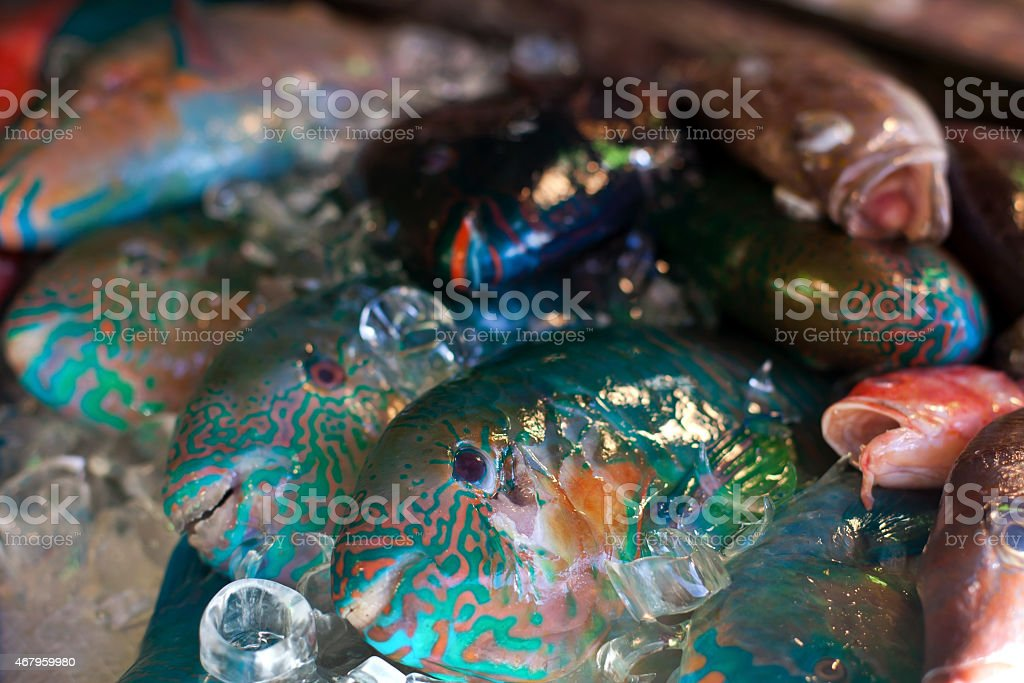 Lapu-lapu, red snapper and tuna, seafood on market stock photo