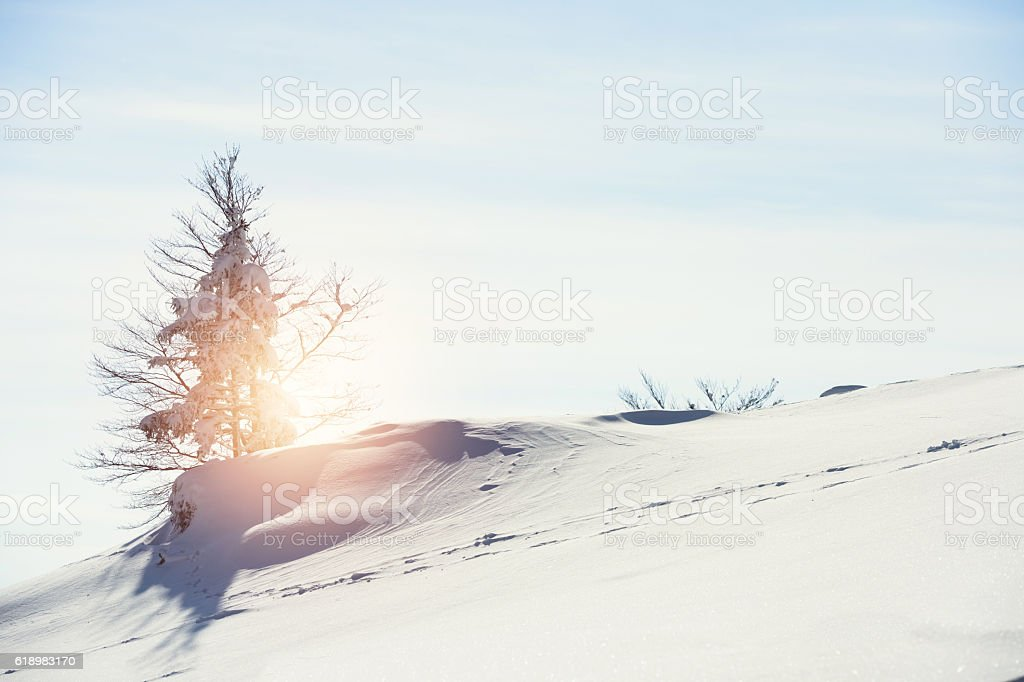 Larch Tree In Snow stock photo