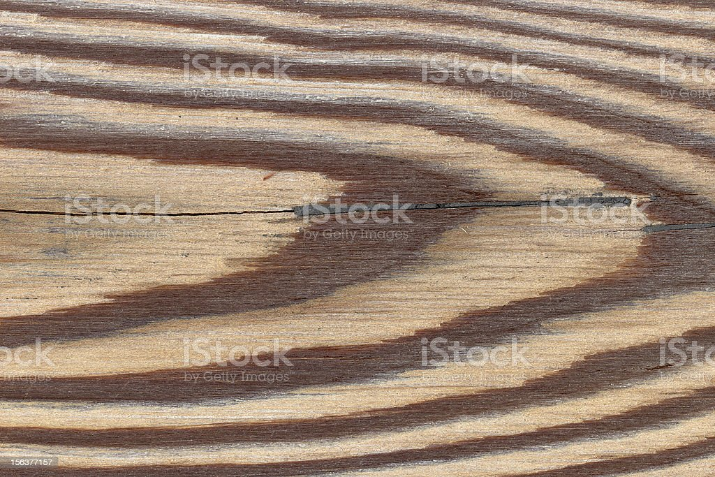 Larch tree wood texture royalty-free stock photo