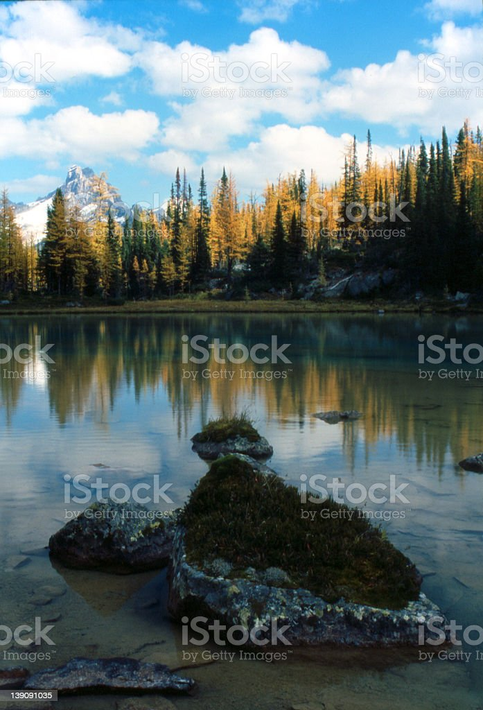 Larch Valley, BC royalty-free stock photo