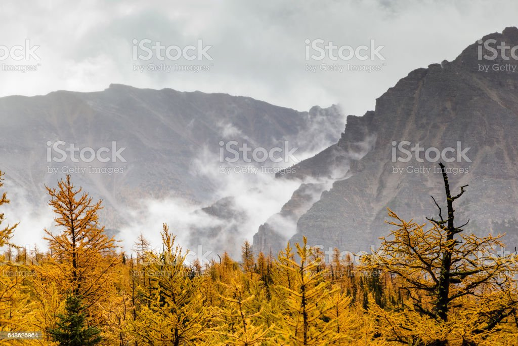 Larch Valley in the Canadian Rockies stock photo