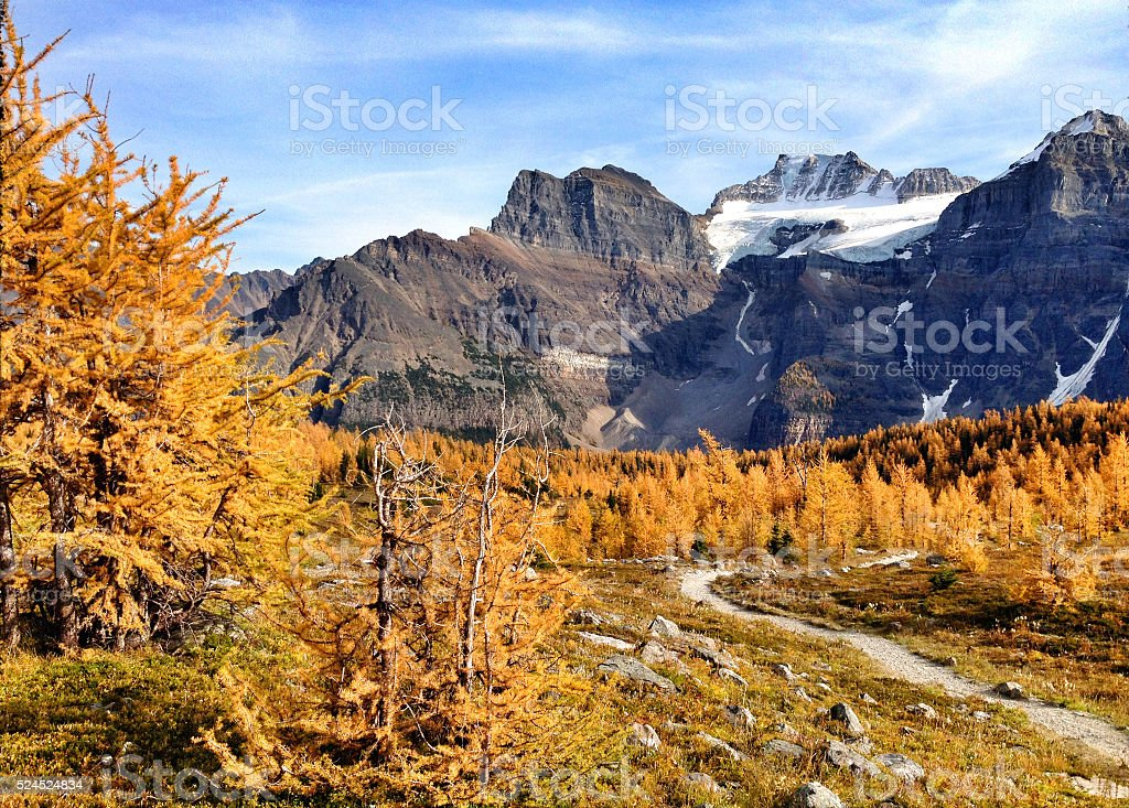 larch valley stock photo