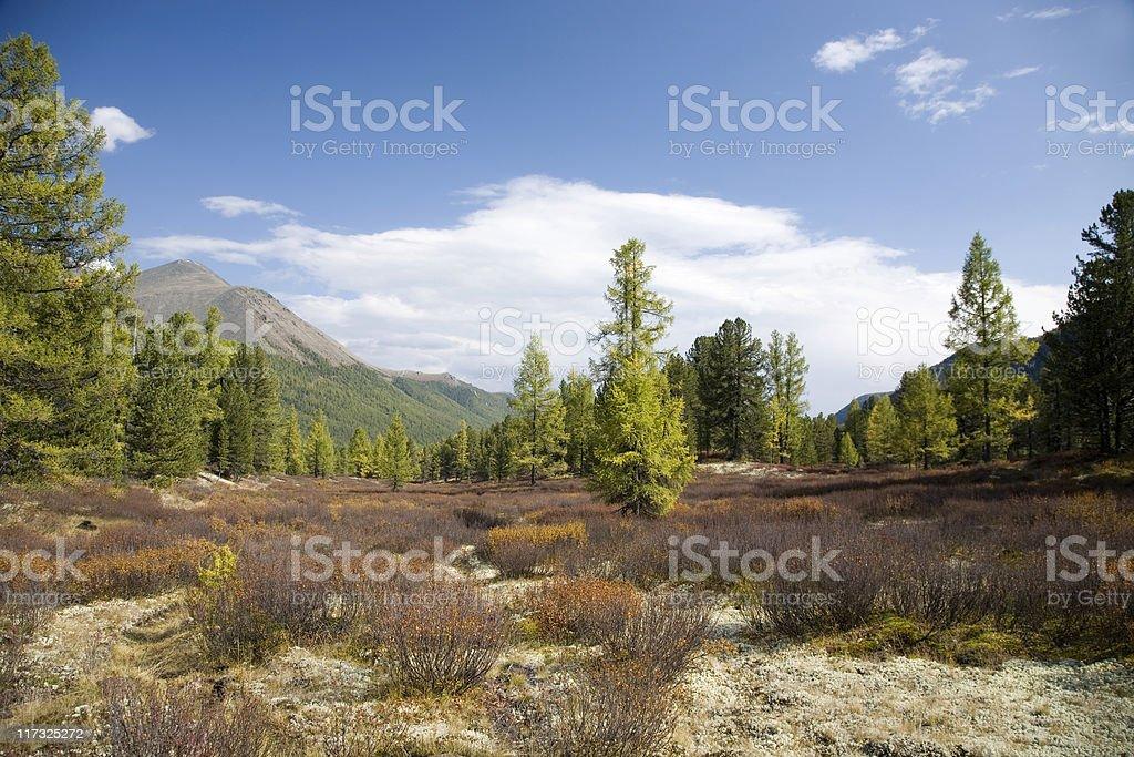 Larchs in valley river Karatosh stock photo