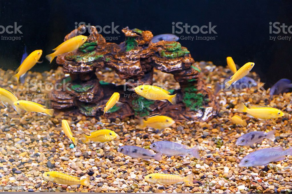 large amount of little fishes stock photo