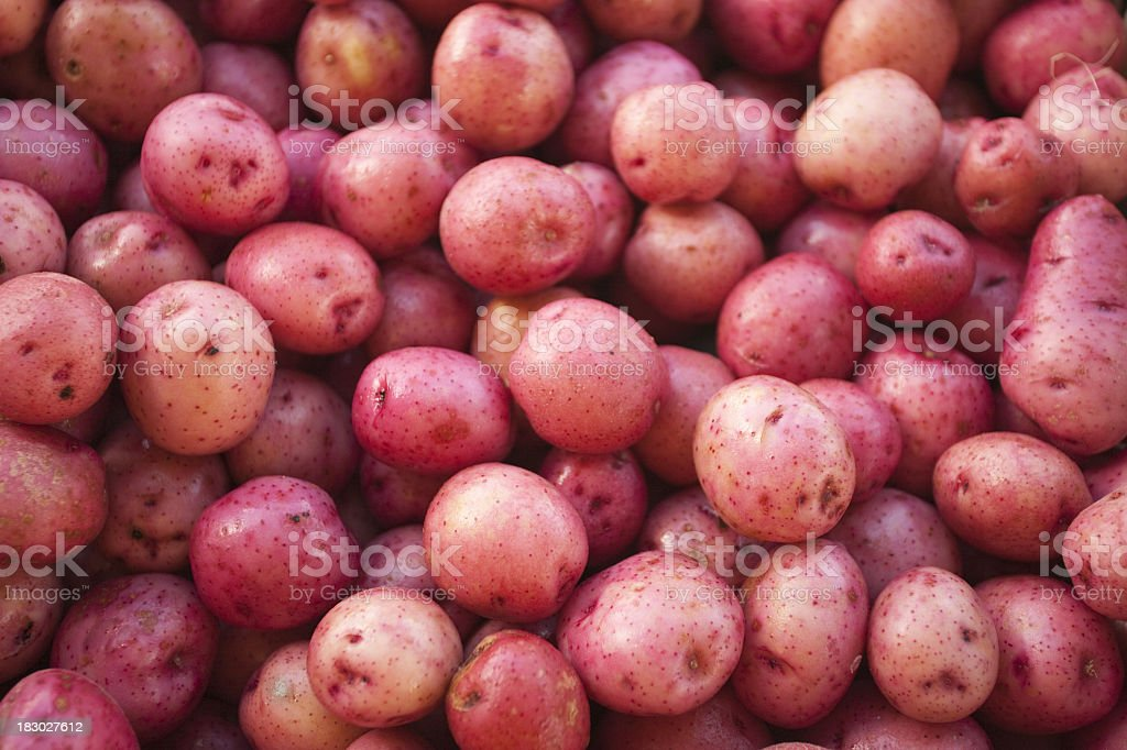 A large amount of small red skin potatoes stock photo