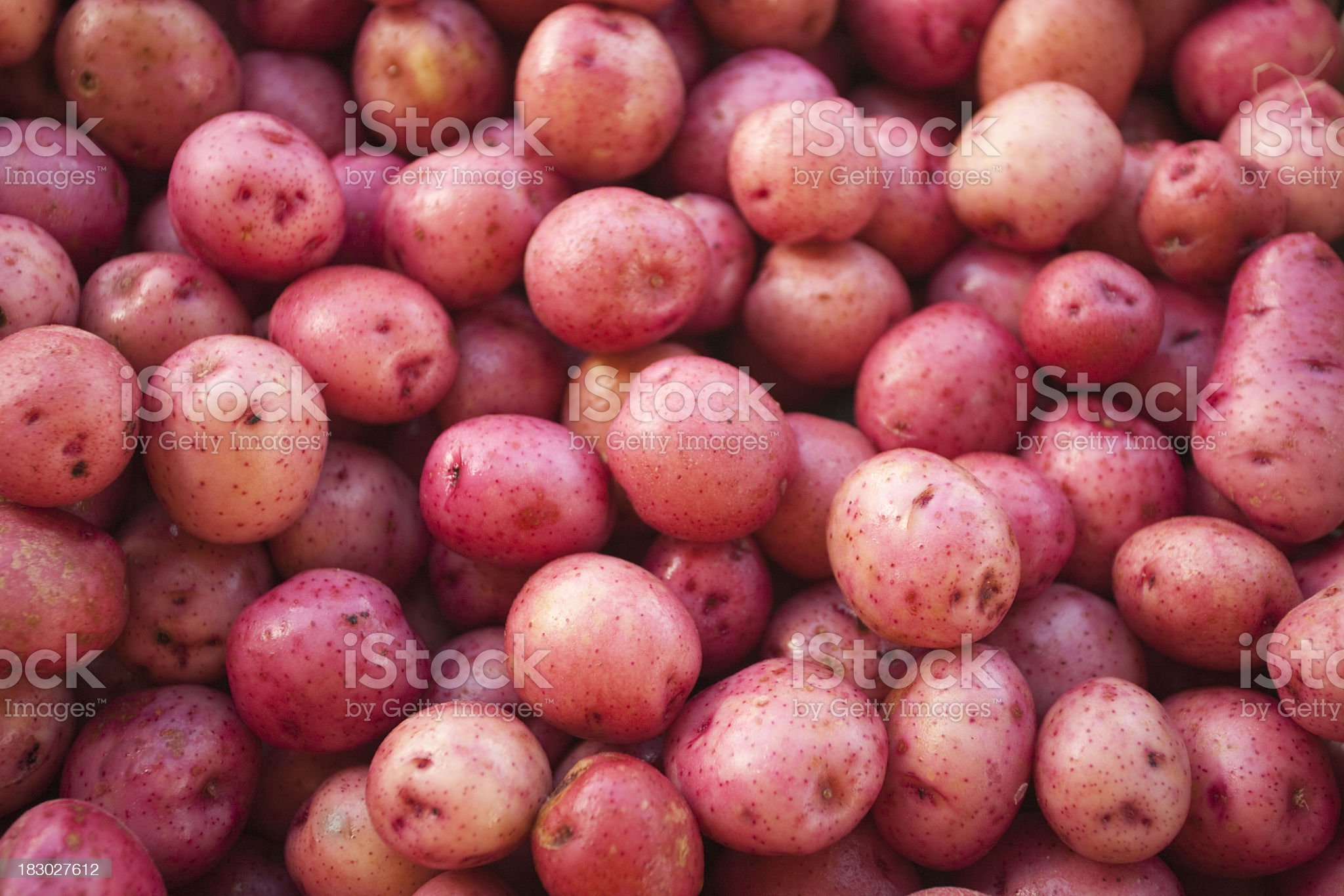 A large amount of small red skin potatoes royalty-free stock photo