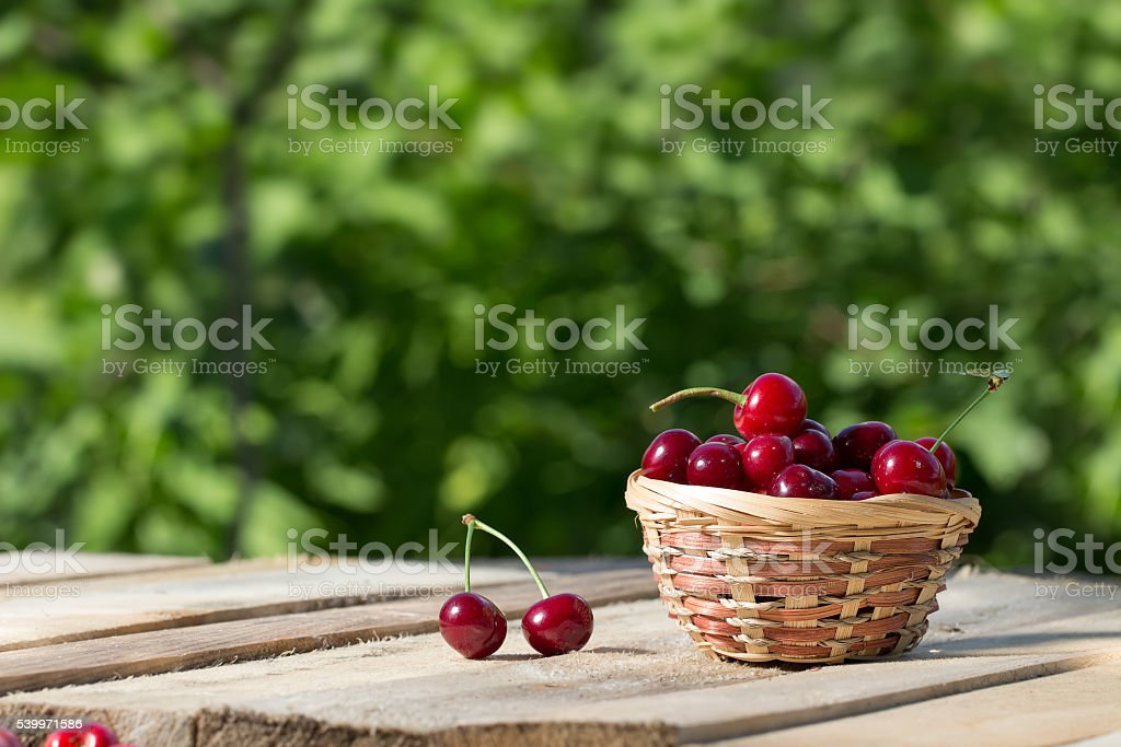 large and juicy ripe cherries in a basket on table stock photo