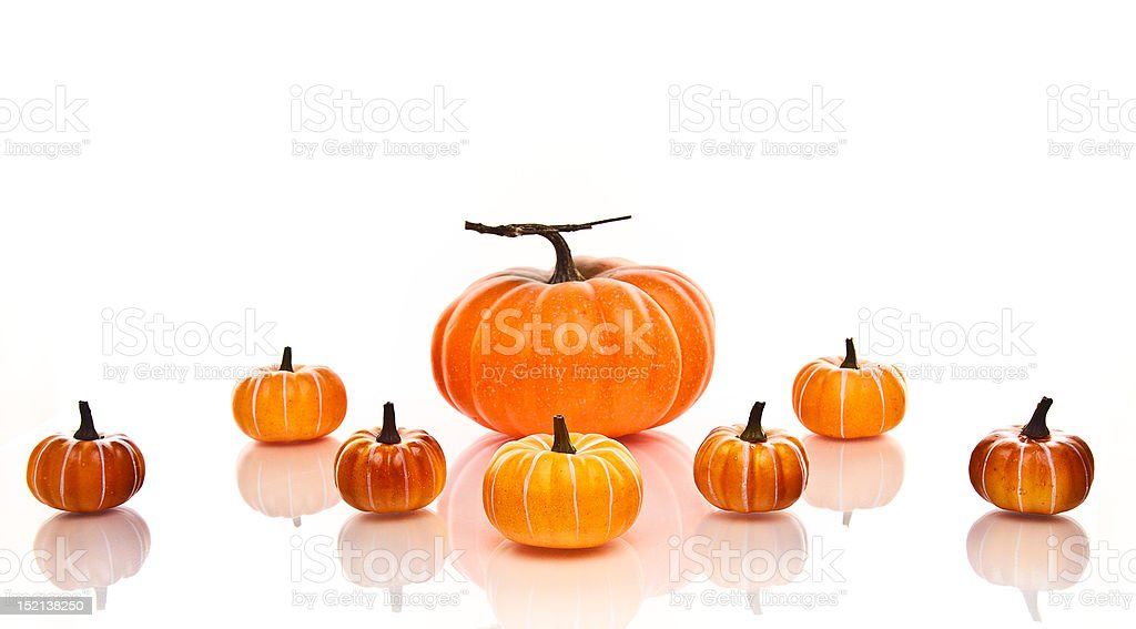 Large and Small pumpkins in rows on a white background. royalty-free stock photo