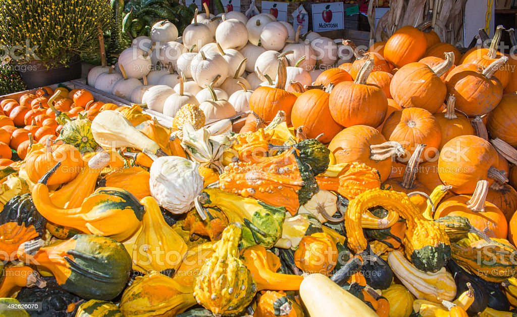 Large Assortment of Squash and Pumpkins stock photo